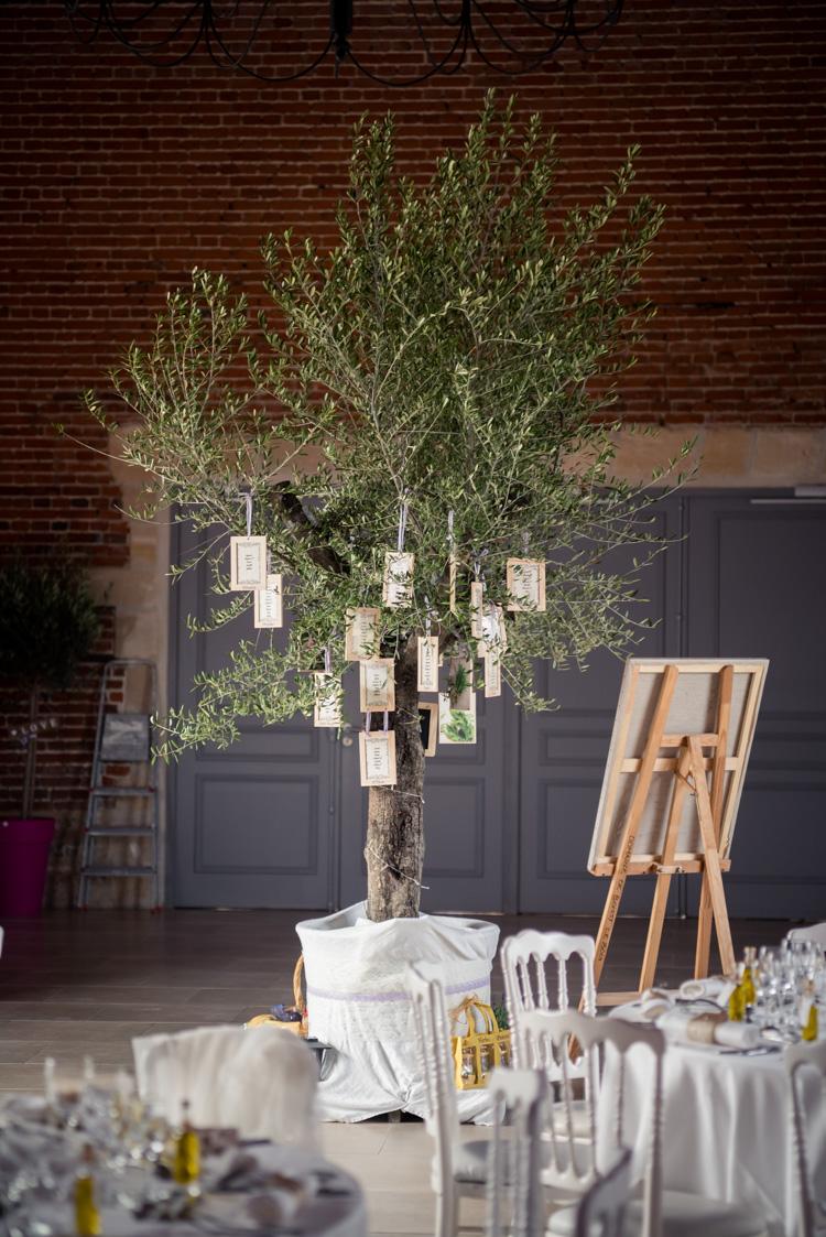 arbre olivier